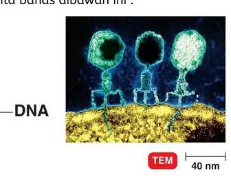 Virus-adalah-Pengertian-Sejarah-Struktur-Sifat-Bentuk